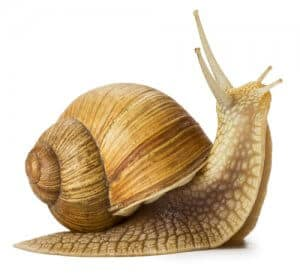 How a Snail Changed Personal Injury Law